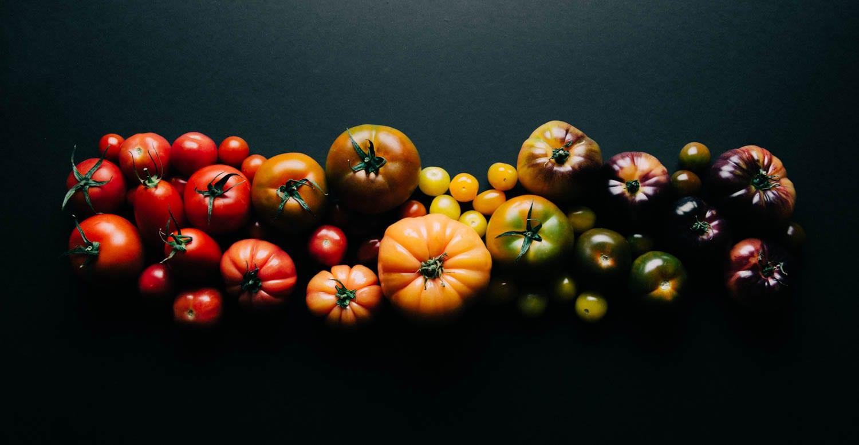 Tomato gradient Inbal Cabiri
