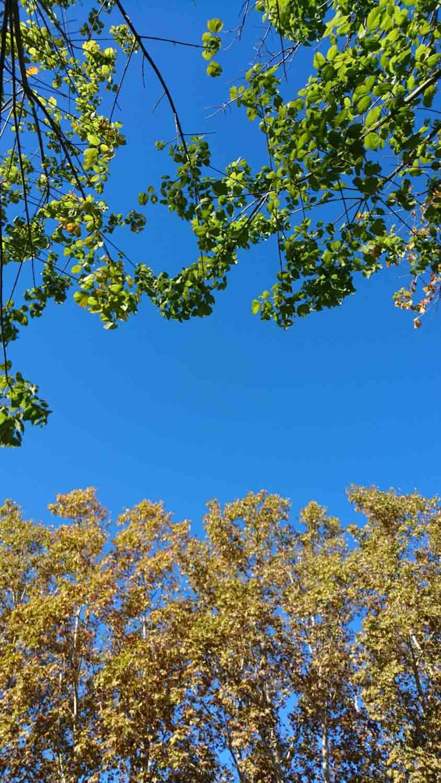 פארק מיגדיה גירונה ענבל כבירי