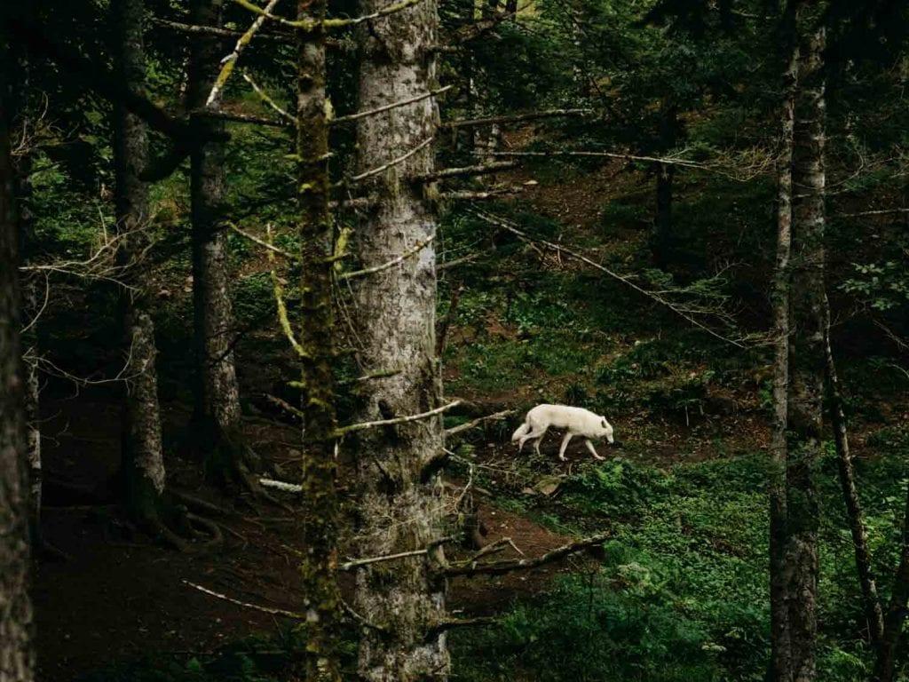 Aran park Inbal Cabiri Animals